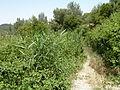 Hadassah Trail P1150550.JPG