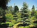 Hakone Gardens, Saratoga, CA - IMG 9174.JPG