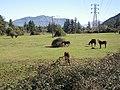 Haras Sausalito. - panoramio - R.A.T.P. (3).jpg