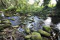 Harvey creek overflow (9848090276).jpg