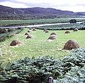 Hay stooks in Strath Naver - geograph.org.uk - 620236.jpg
