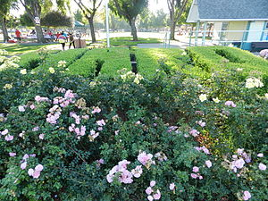 Hayward Area Recreation and Park District - H A R D topiary, Kennedy Park