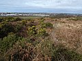 Heathland path below Carn Brea - geograph.org.uk - 1185926.jpg