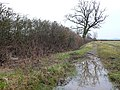 Hedge, tree and puddle - geograph.org.uk - 710804.jpg