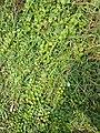 Herb 1.jpg