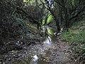 Hertford, Rowleys Road Drain - geograph.org.uk - 2157460.jpg