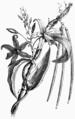 Hetzel Magasin1903 d669 Monographies végétales 11.png