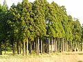 Higashinakanoshin, Tateyama, Nakaniikawa District, Toyama Prefecture 930-1365, Japan - panoramio (4).jpg