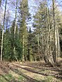 Highclere Wood - geograph.org.uk - 360317.jpg