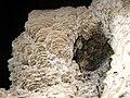Higuera 2010-03-27 18-01-19 (4471832906).jpg