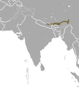 Himalayan pika - Image: Himalayan Pika area