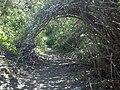 Holly Jim Trail - panoramio (6).jpg