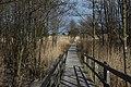 Holzweg im Nationalpark Vorpommersche Boddenlandschaft.jpg