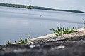 Hoppande fisken (8922071666).jpg