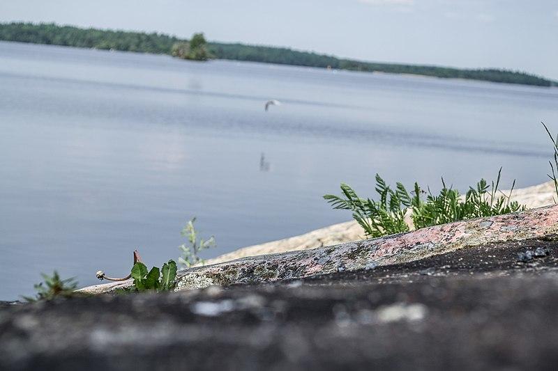 File:Hoppande fisken (8922071666).jpg