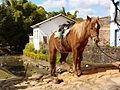 Horse in Tiradentes - Brazil.jpg