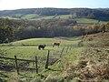 Horse paddocks at Birchwood Common - geograph.org.uk - 621826.jpg