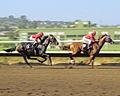 Horse racing at the Del Mar Racetrack in Del Mar, CA.jpg