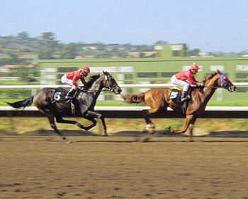 Horse racing at the Del Mar Racetrack in Del M...