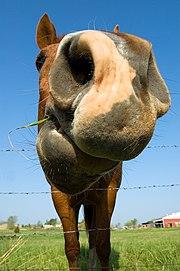 A horse's snout.