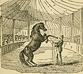 How to handle and educate vicious horses (1906) (14784156662).jpg