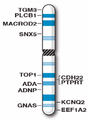 Human chromosome 20 with ASD genes from IJMS-16-06464.png