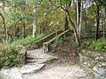Ichetucknee Springs SP north stairs up02.jpg