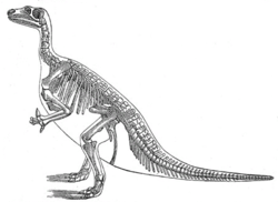 Iguanodon bernissartensiksen luuranko (Meyers encyclopedia, 1890).