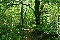 Ilston Community, Gelli-Hir Wood - geograph.org.uk - 185118.jpg
