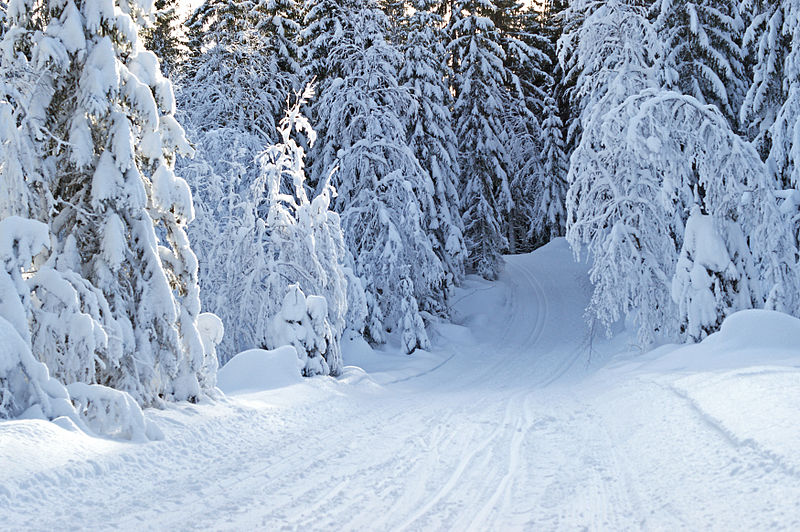 File:In the winter forest (5431146866).jpg