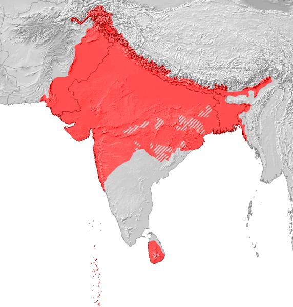 Indoarische Sprachen  Wikipedia