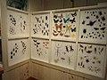 Insect exhibit - Royal Ontario Museum - DSC00172.JPG