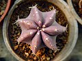 "Iran-qom-Cactus-The greenhouse of the thorn world گلخانه کاکتوس ""دنیای خار"" در روستای مبارک آباد قم- ایران 09.jpg"