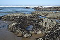 Irish Beach 5 23 08 -pacificcoast -ocean (25757964968).jpg