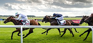 Horseracing in Ireland - Irish Derby day, 2014, at the Curragh racecourse