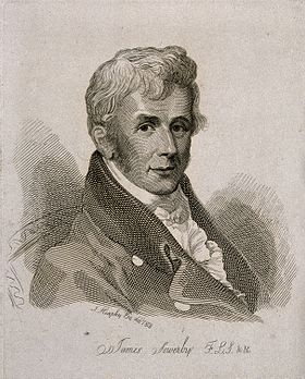 James Sowerby. Line engraving by Mrs D. Turner after T. Heap Wellcome V0005557.jpg
