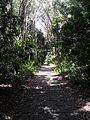 Jardín canario 97.JPG