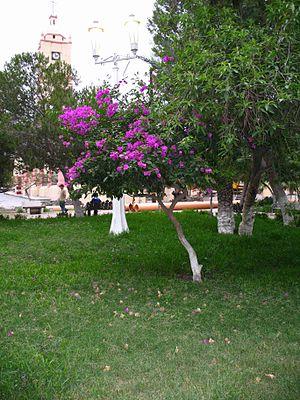 García, Nuevo León - Image: Jardín de la Plaza principal año 2006