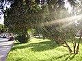 Jardines de Chamartín - panoramio.jpg