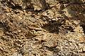 Jaro - kamenna slunce - narodni prirodni pamatka - 02.jpg
