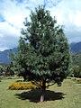Jawaharlal Nehru Memorial Botanical Gardens, Srinagar 13.JPG