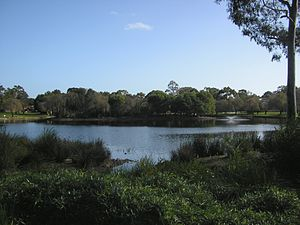 Jualbup Lake - In the foreground, the lake's edge has been planted with native plants to restore the original habitat.