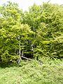 Jydelejet - panoramio (3).jpg