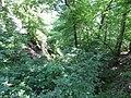 Kaniv Nature Reserve (May 2018) 01.jpg
