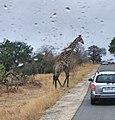 Kapama private game reserve Safari Fotos (2).jpg