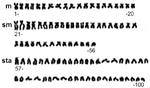 Karyotype of crucian carp (Carassius carassius).png