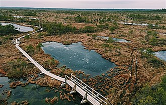Bog - A raised bog located in Ķemeri National Park, Jūrmala, Latvia, formed approximately 10,000 years ago in the postglacial period and is now a popular tourist attraction