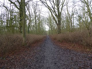 Kings Wood, Corby nature reserve in the United Kingdom