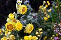 Kirstenbosch-020.jpg