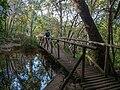 Kirstenbosch National Botanical Garden, Cape Town (P1060061).jpg